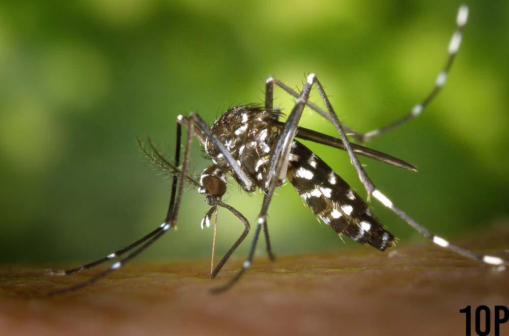 Dangerous Virus Of All Time